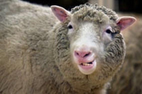 5 juli 1996. Geboorte van het eerste gekloonde schaap