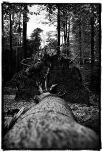 Vlaanderen heeft nog te weinig bossen.