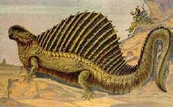 Dimetrodon (Perm)