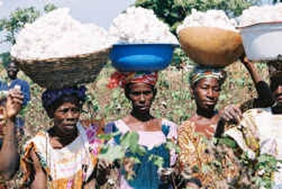 ,,Eerlijk'' katoen komt uit Afrika