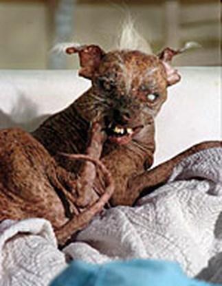 Sam is de lelijkste hond ter wereld