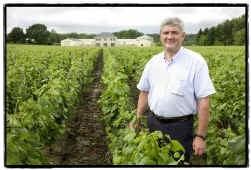Paul Vleminckx tussen de 60.000 wijnstokken van zijn domein in Oud-Heverlee.
