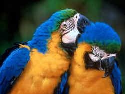 Één papegaai, twee papegaaien... met een wiskundeknobbel.