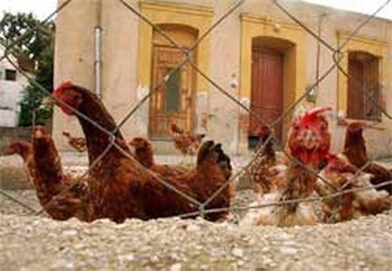 Nieuwe gevallen van H5N1-variant in China, Roemenië en Rusland