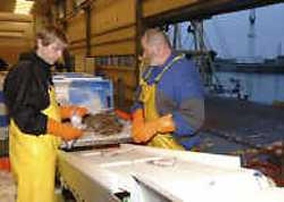 Nieuw dagrecord in Oostendse visveiling