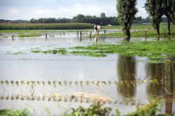 Geen boerenjaar voor de landbouw