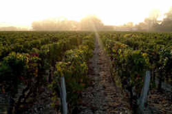 Een Chardonnay uit de Nieuwe Wereld of een Pomerol uit Frankrijk?