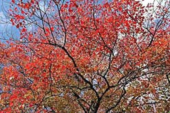 Herfst is extreem zacht