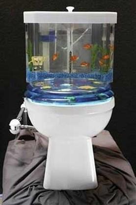 Toilet doet dienst als aquarium