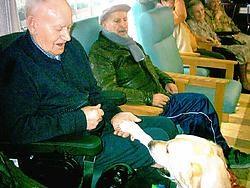 Labrador Falco is altijd welkom in het rusthuis. Hij stimuleert de bewoners om meer contact met mekaar te leggen.<br>Guy Van Den Bossche