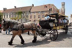 Het boerenpaard Mira, dat donderdag een ongeval veroorzaakte, heeft gisteren al opnieuw tochtjes gemaakt door de stad. Michel Vanneuville<br>