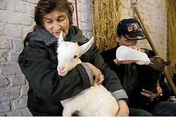 De Brusselse thuislozen verzorgen op de boerderij in Peizegem de dieren.Herman Ricour<br>