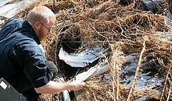 Het verlaten landbouw-<br>bedrijf is een fantastische kweekplaats voor krekels.<br>Eddy Van Ranst<br>