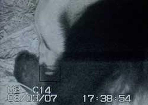 Zeldzame pandabeer geboren in Amerikaanse zoo