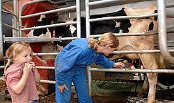 De melkveebedrijven zijn niet onder de indruk van het kort geding dat Campina tegen hen heeft aangespannen: 'De regels van de vrije handel moeten worden gerespecteerd.' Yvan De Saedeleer