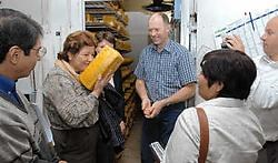 Drie Salvadoraanse ondernemers proefden gisteren van het ondernemer- schap van zuivelboer Luc Callemeyn. Michel Vanneuville