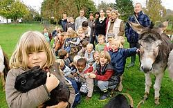 De kinderen uit de derde kleuterklas van het Sint-Victor-<br>instituut zijn voor het laatste jaar op boerderijklas in Brakel.<br> David Stockman