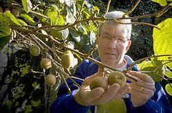 Roger Goethuys kweekt zeldzame kiwi's.Jef Collaer<br>