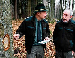 Houtvester Bart Meuleman en boswachter Juul Buys: 'Zwammen hebben de wortels van de bomen zwaar aangetast.'Johan Van Cutsem