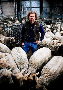 Herder Ludo Van Alphen heeft 700 schapen en nog een 40-tal koeien. Hij probeert ze op een ecologische manier groot te brengen.Wim Daneels<br>