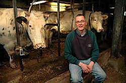 Carl Heyvaert tussen zijn rasrunderen. 'Er zal er niet één deelnemen aan de veeprijskamp van de Peizegemse jaarmarkt', zegt de veehouder. Koen Merens