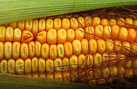 Nestlé-topman: 'Gebruik geen voedsel meer voor biobrandstof'