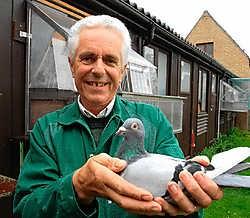 Marc Boddaert vraagt zich af waar de 200 duivenmelkers moeten samenkomen tijdens de verbouwingswerken van de sporthal. Michel Vanneuville