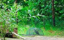 Schepen van Leefmilieu Paul Van Der Straeten bezat een illegale vangkooi.<br>Vogelbescherming Vlaanderen<br>