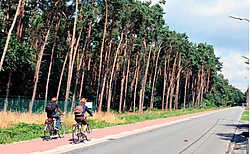 Het Scheutbos wordt voor een derde woongebied.Michel Moens