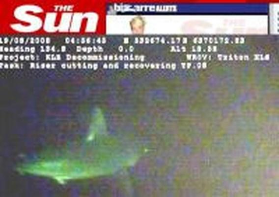 Haai gespot in de Noordzee