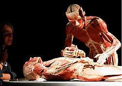 Dokter Von Hagens over 'Körperwelten': 'Als het om lichamen gaat, heb ik een röntgenblik.'reuters<br>