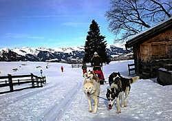 Op de huskyslee met Snowy en co. rr <br>