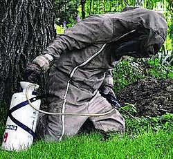 Het is geen pretje om bij zomerse temperaturen de wespen te lijf te gaan in zware pakken. Louis Verbraeken