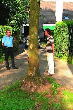 Al 20 jaar vragen de bewoners om de bomen midden op hun oprit weg te nemen. mvn