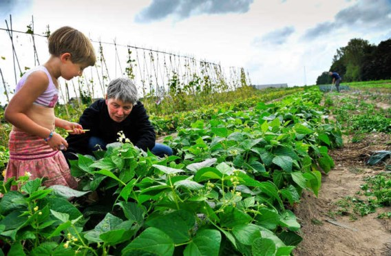 In de tuin van Het Open Veld kan je zelf je groenten plukken. Bart Dewaele