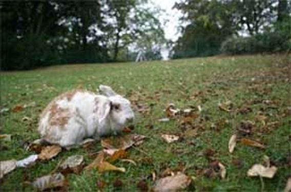 Egels, eekhoorns en konijnen gespot bij zoogdierentelweekend