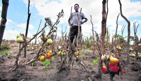 Boeren in Malawi hebben steeds vaker te lijden onder extreme weersomstandigheden. photo news