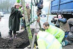 Minister Brigitte Grouwels plant de eerste zilverlinde op de Tervurenlaan. Matthias Vanheerentals