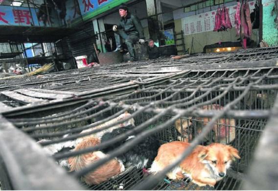 Op de markt in Wuhan worden honden verkocht. Niet als huisdier in spe maar om geslacht en opgegeten te worden.epa