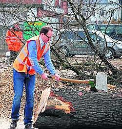 Burgemeester Truyens mocht het startsein geven door de eerste boom om te hakken. If