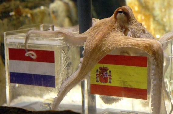 Octopus Paul orakelt: Spanje wordt wereldkampioen