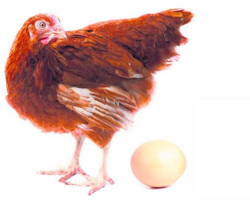Wetenschappers zijn formeel: zonder kip geen ei.shutterstock