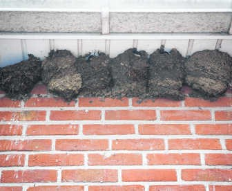 Nest naast nest naast nest.svde