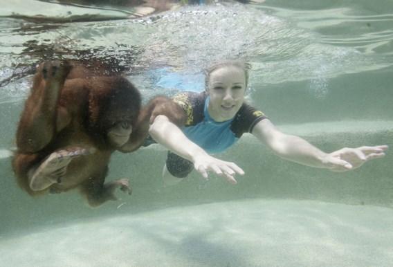 FOTO: Ga eens zwemmen met een aap
