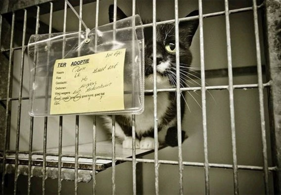Alle katten gesteriliseerd tegen 2016