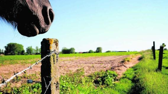 """'De Oeso en Eurostat stellen """"platteland, gelijk met het begrip """"dunbevolkt,', zegt de Oeso. 'Terwijl je moet uitgaan van het karakter van regio's.'Katrijn Van Giel"""