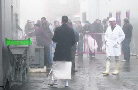 Vele moslims kwamen gisteren naar de kippen- en konijnenslachterij in de Kwadestraat in Desselgem om er hun dier ritueel te laten slachten. wbk