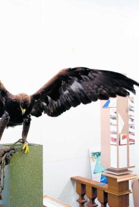 Roofvogels mochten tijdens de voorbereiding vrij rondvliegen in het atelier. Het levert bevreemdende maar prachtige beelden op. Atelier Jan De Cock