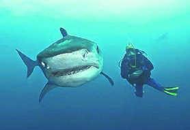 Vriendelijke haaien in 'Sharkwise'.rr