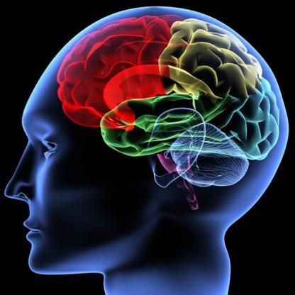 Hersenen werken beter vanaf veertig